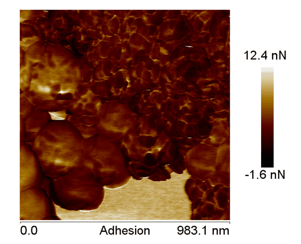 Figure 6. AFM adhesion image, showing the difference between the components of the nanoparticles, confirming the coating of the nano-hydroxyapatite.