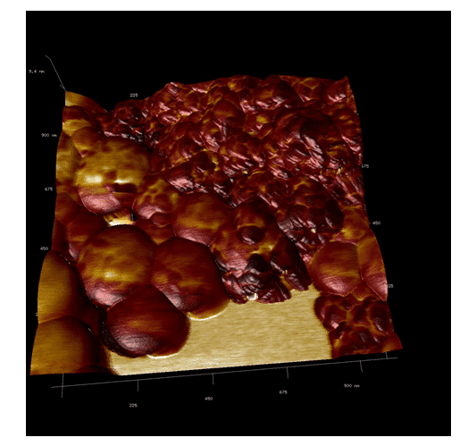 Figure 7. AFM overlay imaging. It is possible to observe the difference between the adhesion of the different materials of the nanoparticle.