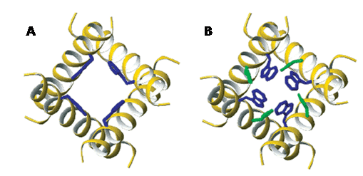 Side-chain-conformations-transmembrane-domain-influenza