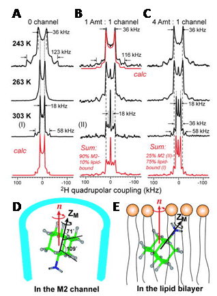 Figure 5. 2H solid-state NMR analysis of amantadine binding to M2 proton channel from influenza A virus.