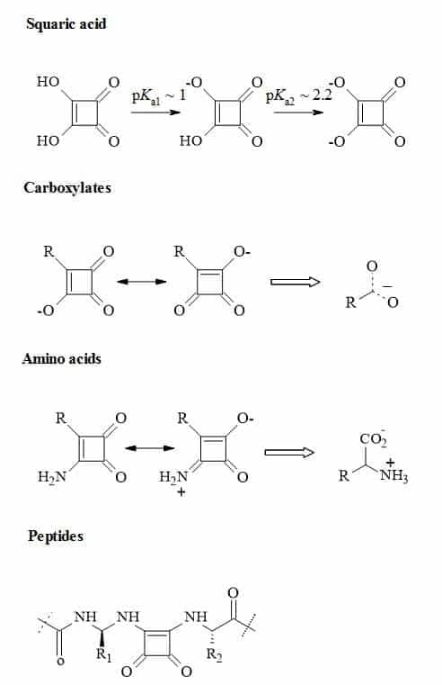 Figure 24. Metaphors of carboxylic acids, amino acids and peptides to their corresponding squaryl derivatives