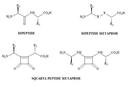 Figure 47. Peptide bond squarate metaphor