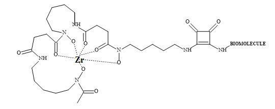 Figure 88. Zirconium-89 DFO-squaramide PET imaging agent